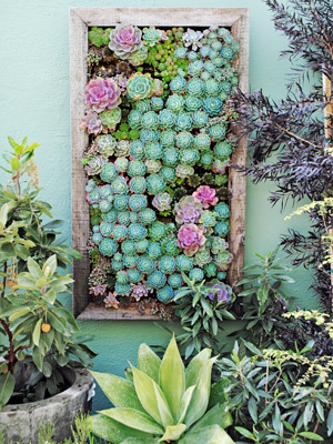 Succulent-plant-garden-how-to-plant-vertical-garden-0412-mdn_large