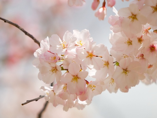 Gardening_spring_flower_large