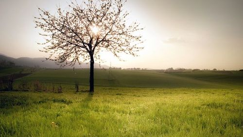 Spring-landscapes-tree-blossom-field_33680_600x450_large