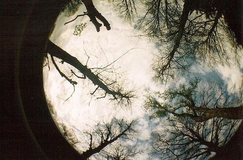 Film-fisheye-makeamillionthink-nature-trees-favim.com-66946_large