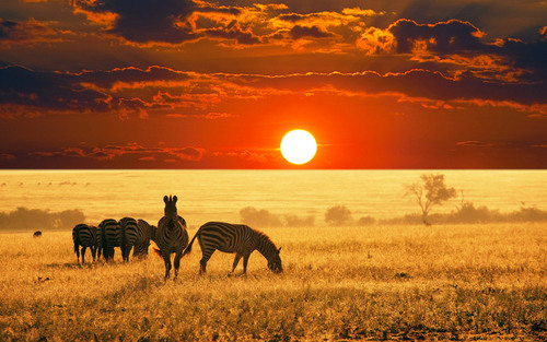 African_savannah_hd_widescreen_wallpapers_1280x800_large