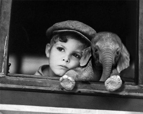 awn, elephant, friends, kid - inspiring picture on Favim.com