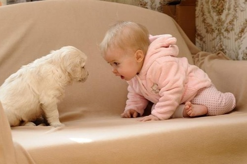Cute-dog-fun-kid-pink-favim.com-344954_large