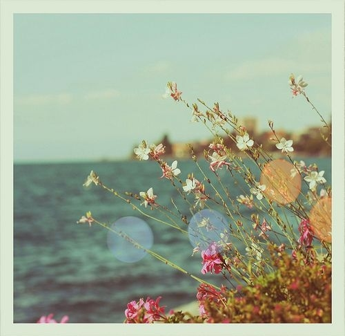 Day,Flowers,Light,Sea,Water - inspiring picture on PicShip.com