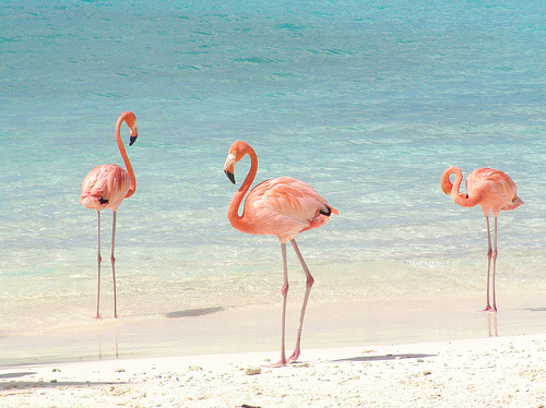Beach,Cute,Flamingos,Madamelulu,Ocean,Pink - inspiring picture on PicShip.com