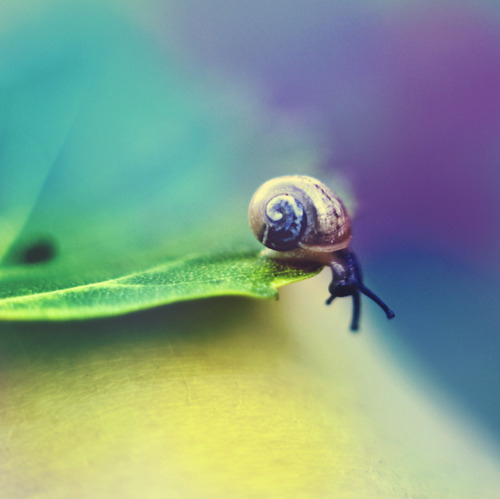 6fd7a0ac7d2610ceca43a30114624c99 large Adorable,Animal,Cute,Nature,Photography,Snail   inspiring picture on PicShip.com