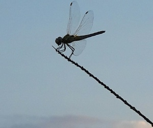 nature greece dragonfly