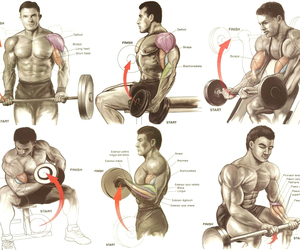 arm exercises workout