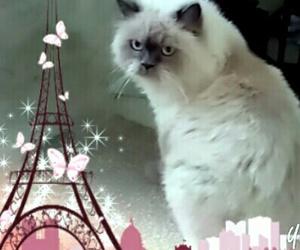 cute cat sweet love