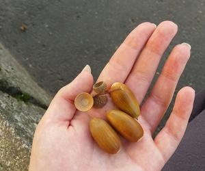 acorn autumn fall