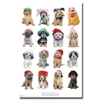 Puppies-dogs-with-hat-photo-animal-poster-print-by-keith-kimberlin-22x34-269019-355-355_large