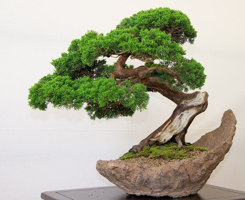 3-bonsai-pillnitz-trees-27_large