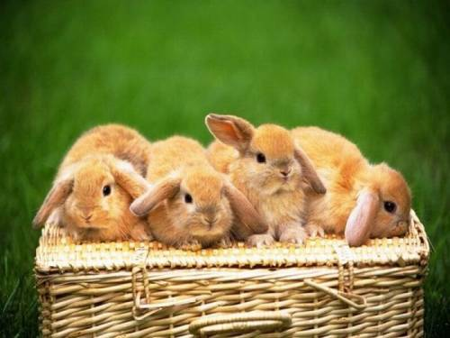 Bunny-cute-30_large
