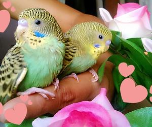 passarinhos