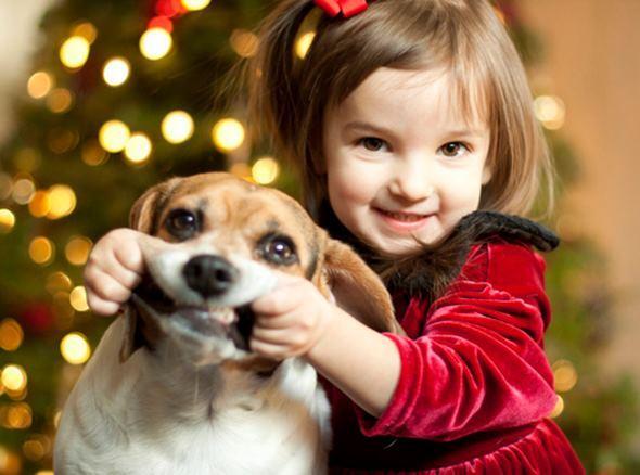 Cute Dog Smiling Cute Dog Girl Smile