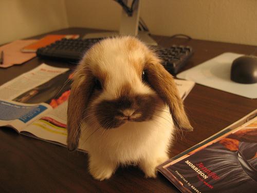 Cute_bunnies_27_large