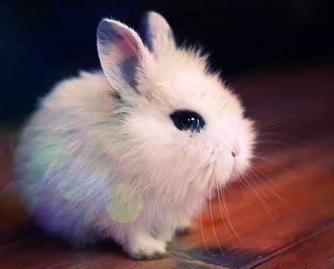 Adorable-baby-bunny-cute-fluffy-sweet-favim.com-45730_large