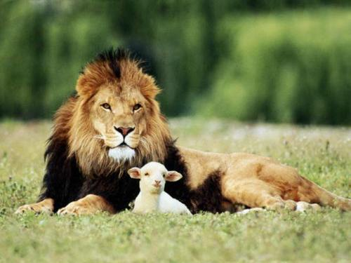 Lion-and-the-lamb_large
