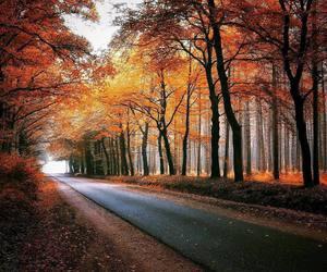 beautiful nature autumn