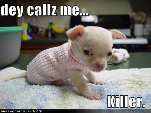 Cute-puppy-pictures-call-me-killer_large