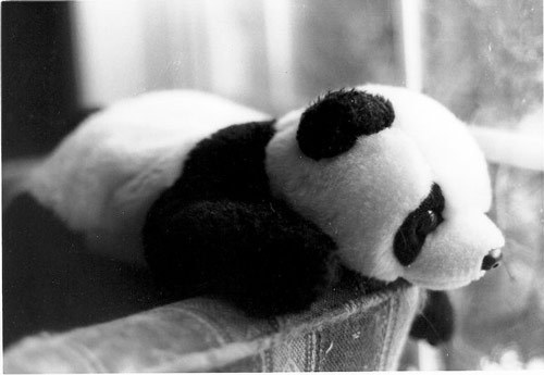 35-so-sad-panda_large