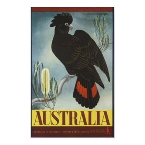 Black_cockatoo_vintage_poster-r347b6b2980f0479185566aec39f9be31_20a9_500_large