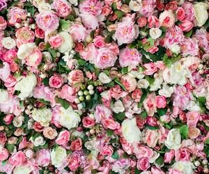 flowers beautiful pink