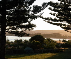 waterscape trees dusk