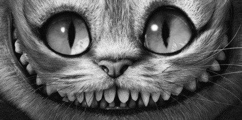 Cheshire Cat picture on VisualizeUs
