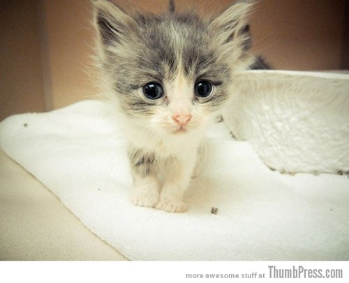 Cute Kitty 630x512 large 15 Pictures That Define The Cute Factor