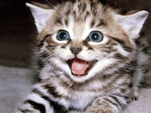 Funny-cats-wallpaper-gallery-12_large