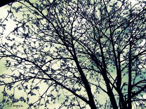 Tree_and_sky_by_okath-d4wedah_large
