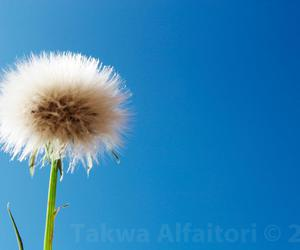 takwa photography