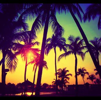 palmtrees photo - download this photo for free