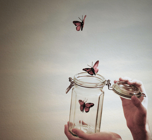 Jar-of-butterflies_large