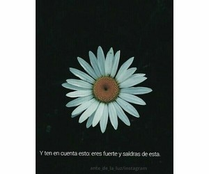 flores flawers frase