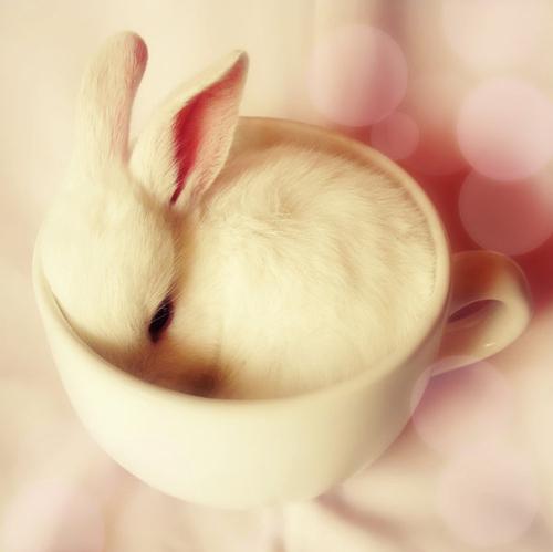 Rozkošný-baby-zajíček-cup-cute-načechraný-favimcom-43512_large_large