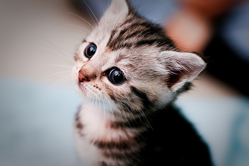 Cat-cute-eyes-favim.com-405463_large