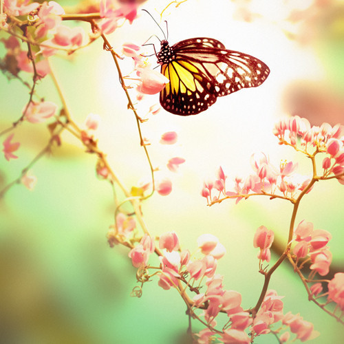 Butterfly_ground_beautiful_flowers_spring_zen-c898cc43a5984c671888ce1fb8e30d80_h_large
