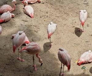 flamingos salmÃo zoo aves