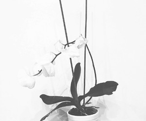 flower orchid pretty