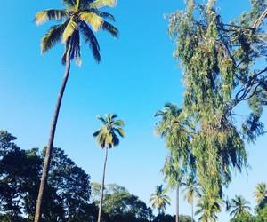 cielo azul verde sol luz