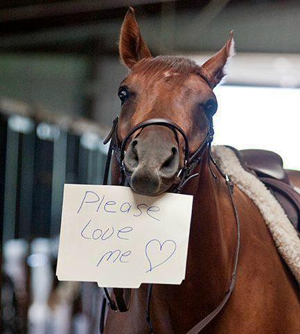 Foto paard met veulen 31