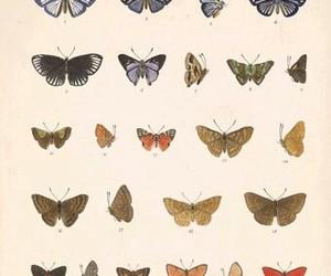 butterflies gif cute