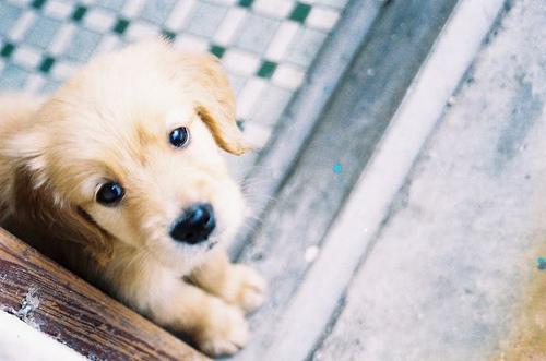 რატომ ეშინიათ ძაღლების და როგორ ვებრძოლოთ ამ შიშს