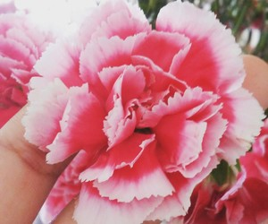 roses live your life