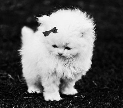 Black-and-white-bow-cat-cute-lovely-favim.com-415549_large
