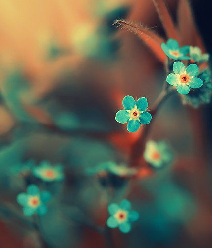 Beautiful-blue-flower-love-nice-favim.com-414249_large