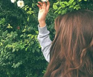 sun flower green