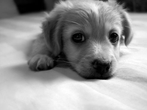 Cute-dog-dogs-puppy-favim.com-414172_large